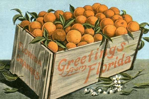 Crate of Oranges