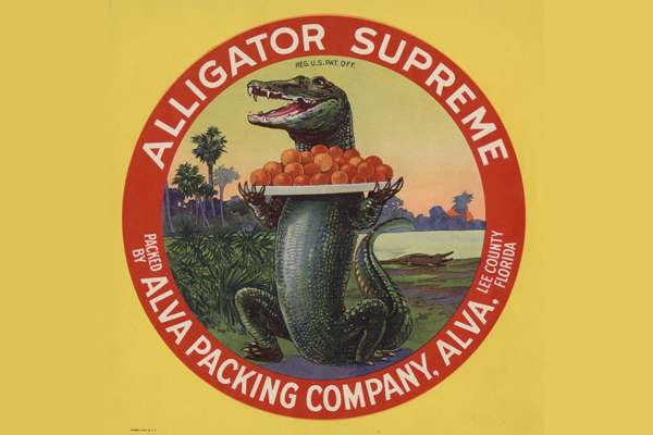 Citrus label with an alligator holding a platter of oranges