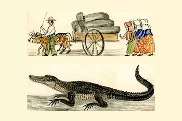 Florida Pioneers and an alligator